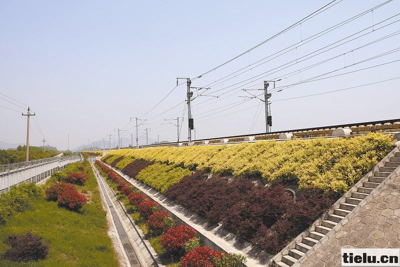 本报特约通讯员 陆应果 图为宁杭高铁边坡绿化美景怡人。 陆应果 摄 4月的江南,春意盎然,鸟语花香。旅客乘坐高铁在繁华的长三角城市群间穿梭,沿线草长莺飞,树木枝繁叶茂,风景如画。铁路沿线绿化如此美丽,是上海铁路局走上绿色发展之路,大力营造绿色 生态走廊取得的丰硕成果。 科学种植巧规划绿色通道大手笔 铁路沿线建设 绿色长廊,对固化路基、确保安全有着极其重要的作用,同时给旅客带来美的享受,让他们在旅途放松心情。近年来,上海局坚持 和谐铁路,和谐环境的建设理念,高度重视铁路沿线 绿色通道建设